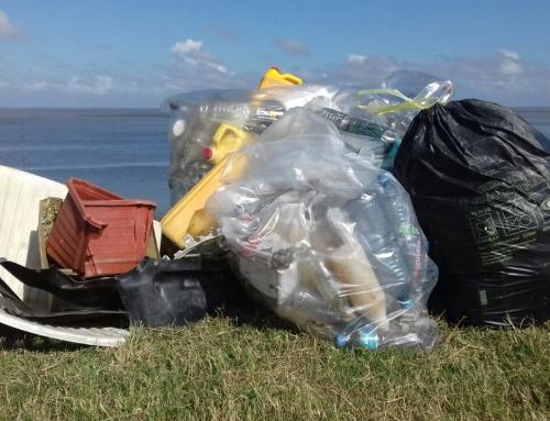 DC Nickerie helpt mee Zeedijk schoon te maken